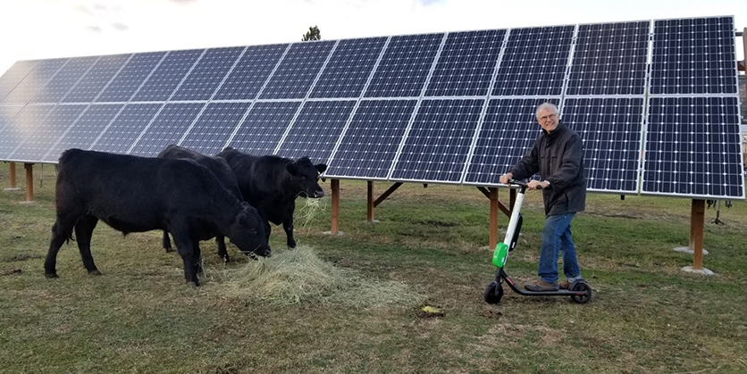 Man on electric scooter with cows in front of solar panels