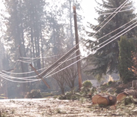 Downed power lines and street littered with pieces of fallen trees
